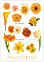 Flower Chart In English Rakshya Kharel Goonerrakshya On Pinterest
