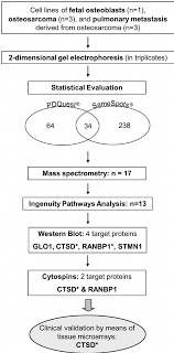 Validation Study Design Workflow Of The Study Design Target Reached Significance