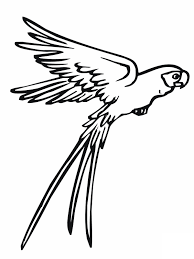 Small Picture New Parrot Coloring Pages Gallery Coloring Pag 1699 Unknown