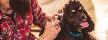 how to clean a dog s ears a handy