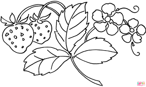 Small Picture Strawberry Flower coloring page Free Printable Coloring Pages