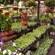 fred meyer garden center. Plain Fred Photo Of Dennisu0027 7 Dees Landscaping U0026 Garden Center  Portland OR United Throughout Fred Meyer N