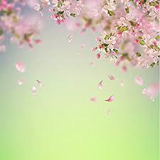 Cherry Blossom Backdrop Amazon Com Laeacco Cherry Blossom Backdrops 6x6ft Vinyl