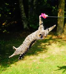 Image result for cat playing children