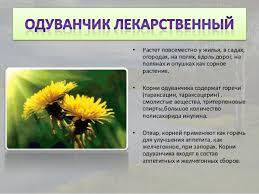 лекарственные растения удмуртской республики 5