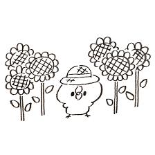 ひまわり畑にいるひよこ ゆるくてかわいい無料イラスト素材屋ぴよたそ