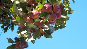 What Fruit Trees Grow In Michigan? | Garden Guides