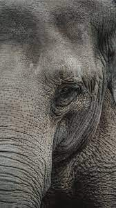 Best Elephant iPhone 8 HD Wallpapers ...
