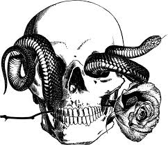 Small Picture human skull snake tattoo art rose png Digital graphics image