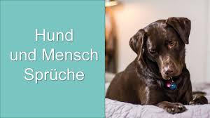 Hund Und Mensch Sprüche Youtube