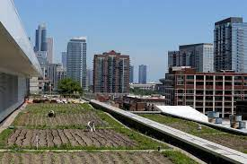 rooftop farms are sprouting nationwide