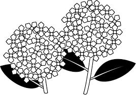 夏の花1 23 あじさい 花の無料イラスト素材 イラストポップ