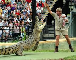 steve irwin son. steve feeds crocodile, murray, with a dead chicken while holding his one-month irwin son o