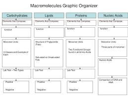 Ppt Macromolecules Graphic Organizer Powerpoint