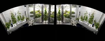 Beginning & Intermediate Controlled Environment Agriculture (CEA) |  Advances in Greenhouse Crop Production
