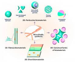 Cell Venn Diagram Prokaryotic And Eukaryotic Cells Venn Diagram Prokaryotic And