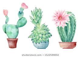 <b>Cactus Pot Watercolor</b> Images, Stock Photos & Vectors   Shutterstock