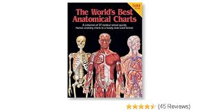 The Worlds Best Anatomical Charts Worlds Best Anatomical