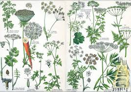 Difference Between Herbs And Shrubs Difference Between