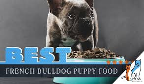 8 Best Foods For A French Bulldog Puppy With Our Most