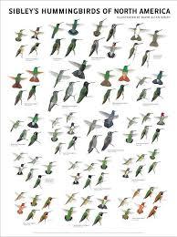 Pin By Vicki Cain On Hummingbird Bird Identification