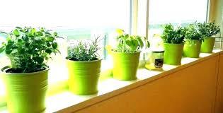 herb garden kit herb garden kit indoor kits urban outdoor herb garden kit home depot