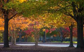 Autumn Lights Tarboro Nc Living In Greenville Nc Greenville Livability