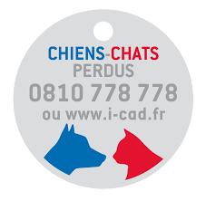 CHIENS ET CHATS PERDUS
