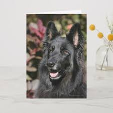black long haired german shepherd card