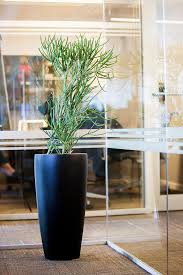 interior landscaping office. Interior Landscaping Office