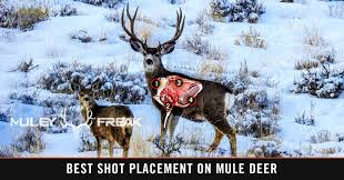 Deer Vitals Chart Mule Deer Anatomy Shot Placement Accuracy Muley Freak