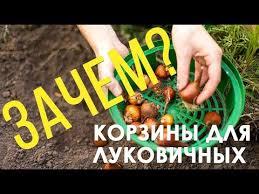 <b>Корзины</b>, лотки для <b>луковичных</b> цветов в вашем саду. - YouTube