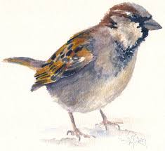 painting 19 painting 20 and painting 21 stus of an english house sparrow in the snow