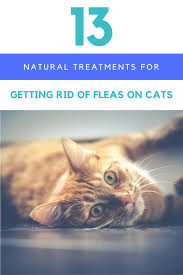 13 natural treatments for getting rid of fleas on cats ideas com