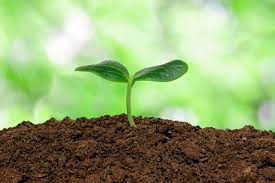 healthy soil and how to make it