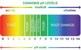 Ph Level Chart Cannabis Ph Chart Guide Autoflower Seed Shop