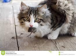souris et le chat ile ilgili görsel sonucu