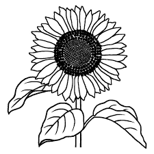 ヒマワリ1向日葵白黒夏の花無料イラスト素材