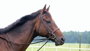 horse face side. Brilliant Horse Brown Horse Wearing Bridle Side Stock Footage Video 100 Royaltyfree  4468973  Shutterstock In Face