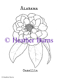 Alabama State Flower Camellia Coloring Page