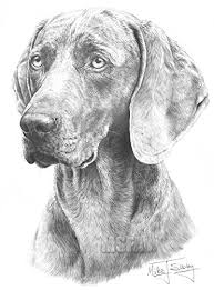 Weimaraner Disegno Stampa Giclee Di Mike Sibley Amazonit Casa E
