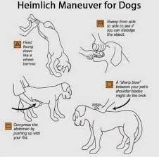 This Is How You Perform The Heimlich Manoeuvre On Your Dog