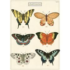Details About Butterfly Chart French Papillons Vintage Style Poster Ephemera