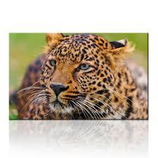 african safari animal photo art prints leopard cheetah canvas wall art picture printing for living room on safari canvas wall art with african safari animal photo art prints leopard cheetah canvas wall