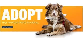 humane society kittens for adoption. Brilliant Kittens Champaign County Humane Society  Home Adoption On Kittens For