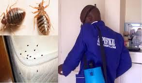 Pest Control Success Tips