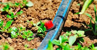 7 best drip irrigation system review