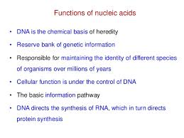 Functions Of Nucleic Acids Nucleic Acid Chemistry