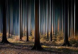 Mystic Wood Fotobehang Behang Bestel Nu Op Europostersbe