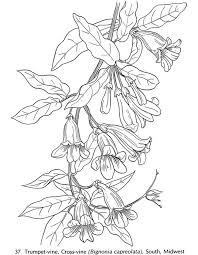 Pin By Oaktrees On Collage Able Coloring Pages Flower Coloring